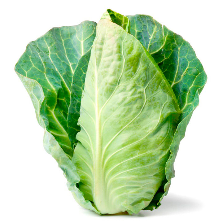Image of Spring Cabbage