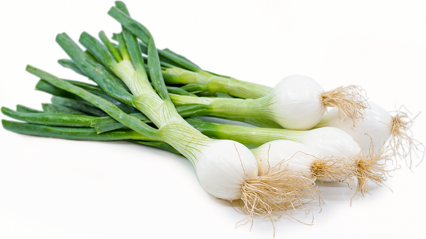 Image of Spring Onions