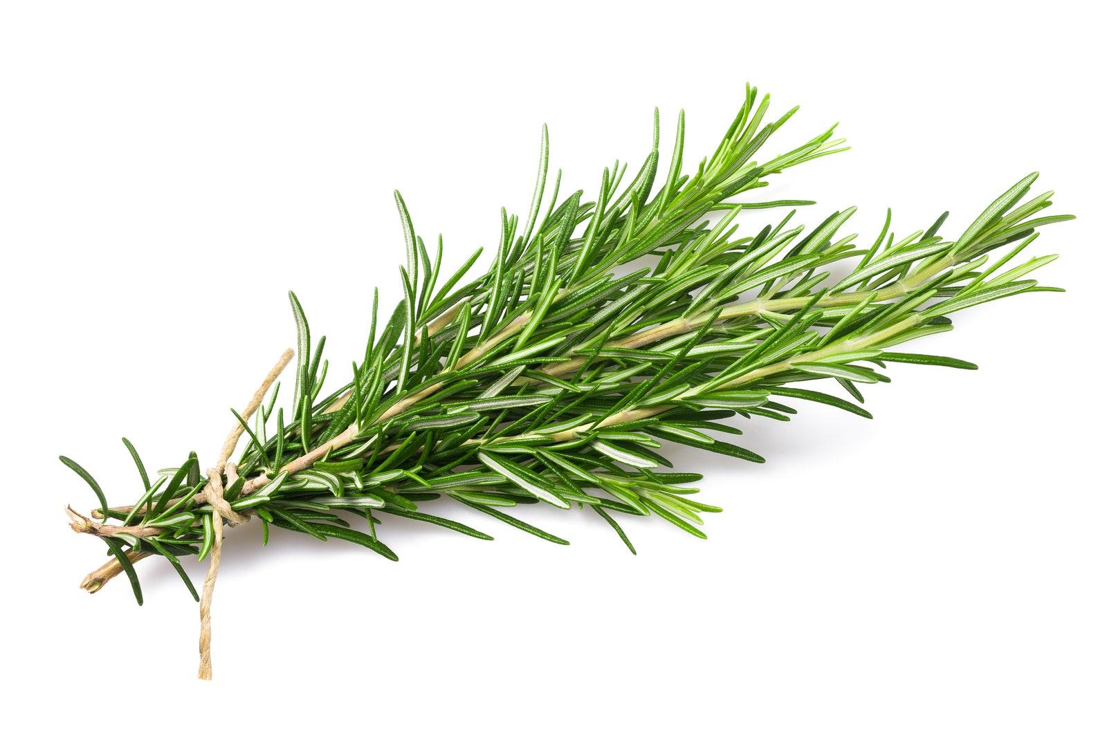 Image of Large Bundle of Fresh Rosemary (50g)