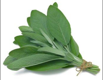 Image of Large Bundle of Fresh Sage (50g)