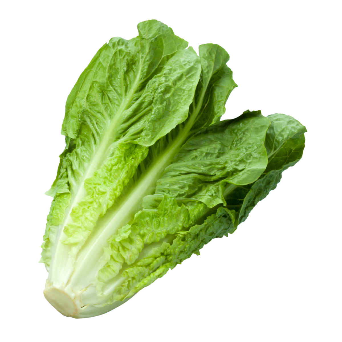 Image of Large Cos Lettuce