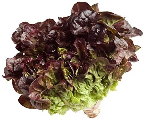 Image of Red Oak Leaf Lettuce