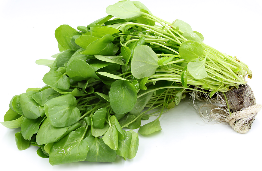 Image of Large Bunch of Fresh Watercress