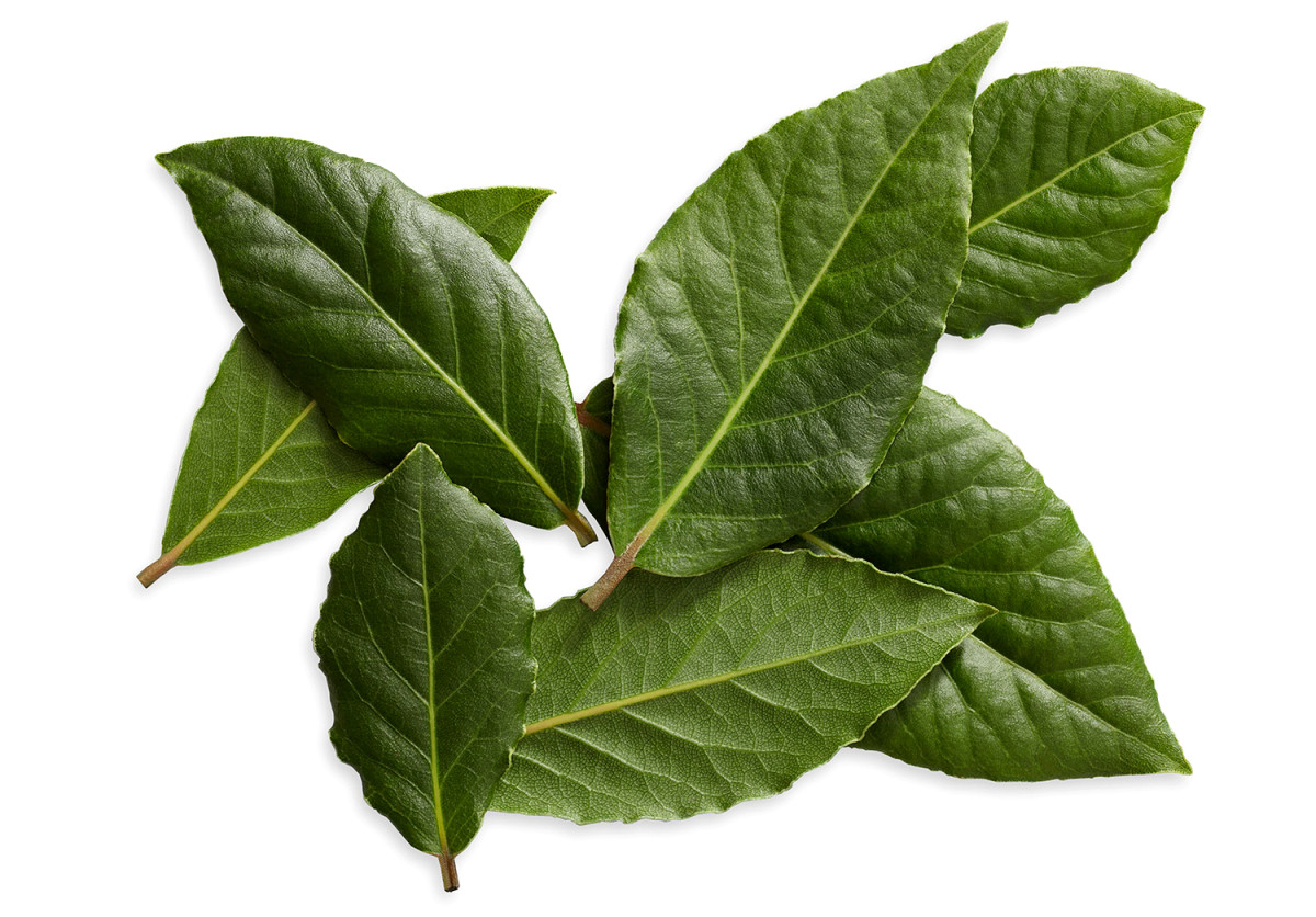 Image of Large Pack of Fresh Bay Leaves (50g)