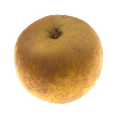 Image of Russet Apple (Minimum Order 3)