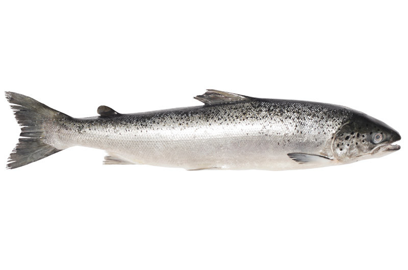 Image of Whole Fresh Salmon (Serves 20)