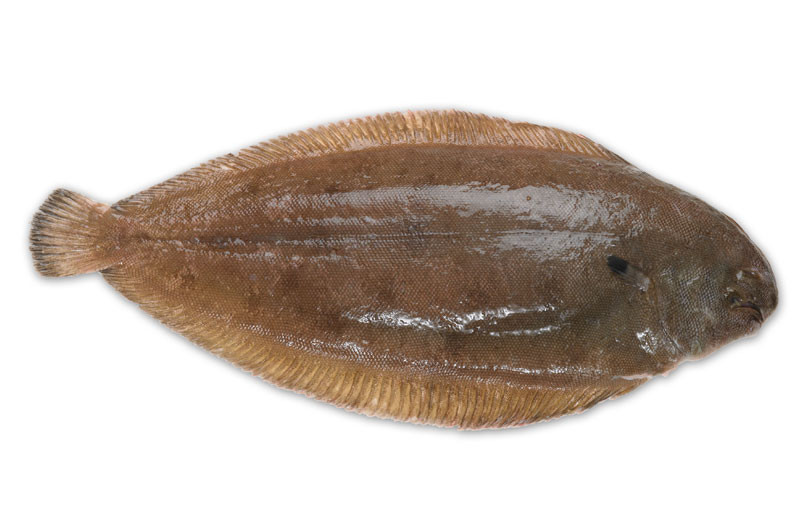 Image of Luxury Dover Sole - Whole Fish on the Bone
