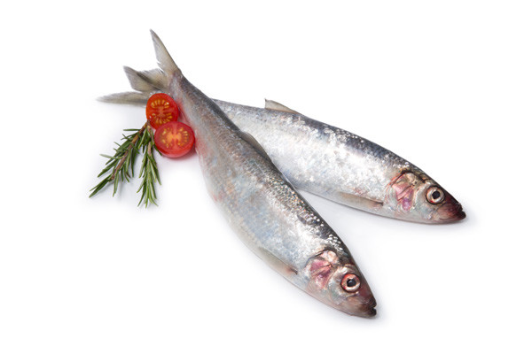 Image of Whole Fresh Herring