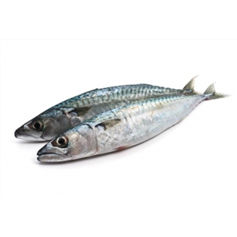 Image of Whole Fresh Mackerel