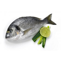Image of Whole Fresh Sea Bream