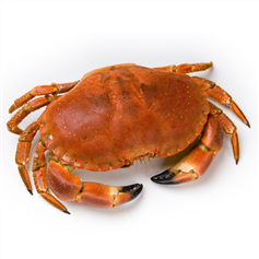 Image of Whole Crab