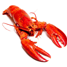 Image of Whole Live Lobster